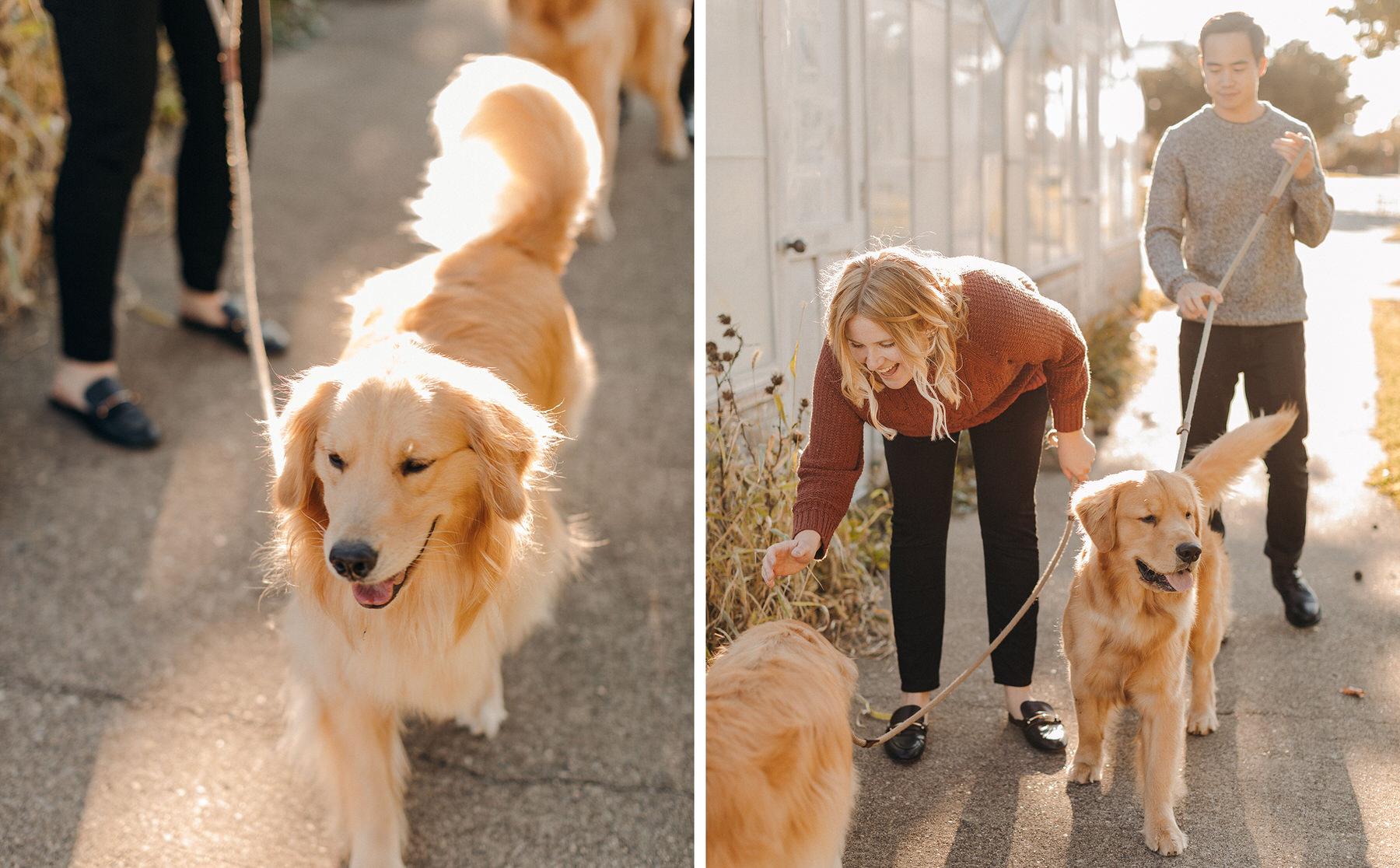 dog parents engagement session